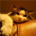 speculate_cat